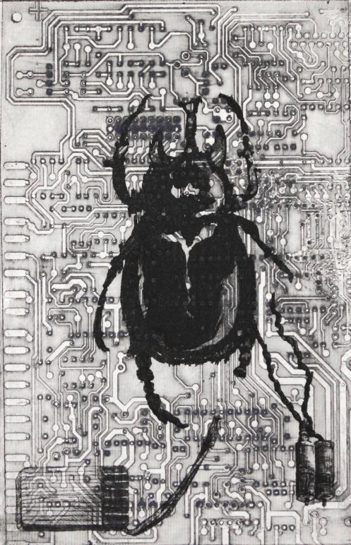 KarinBrosa,Coleoptera 2_2016